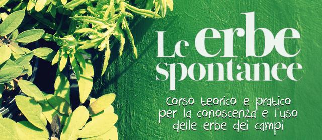 Le erbe spontanee